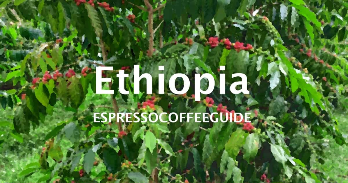 Ethiopia Coffees