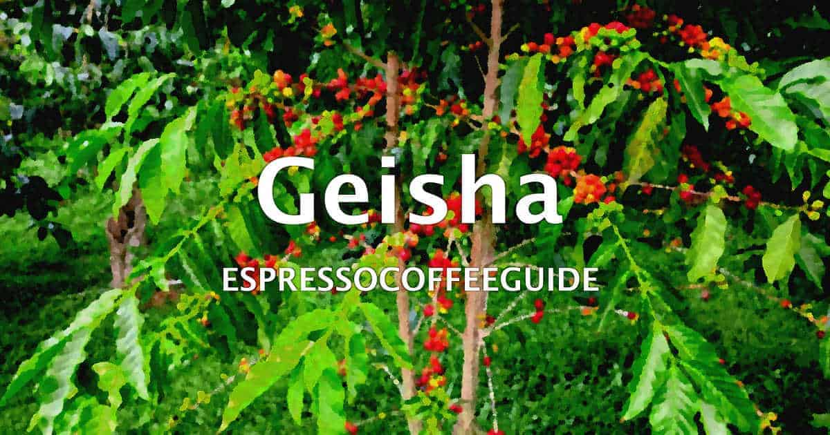 Geisha Coffees