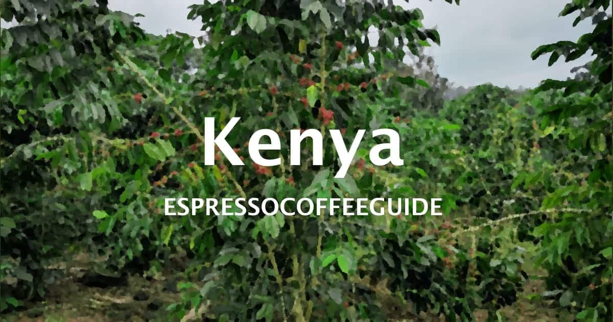 Kenya Coffee Beans - Espresso & Coffee Guide