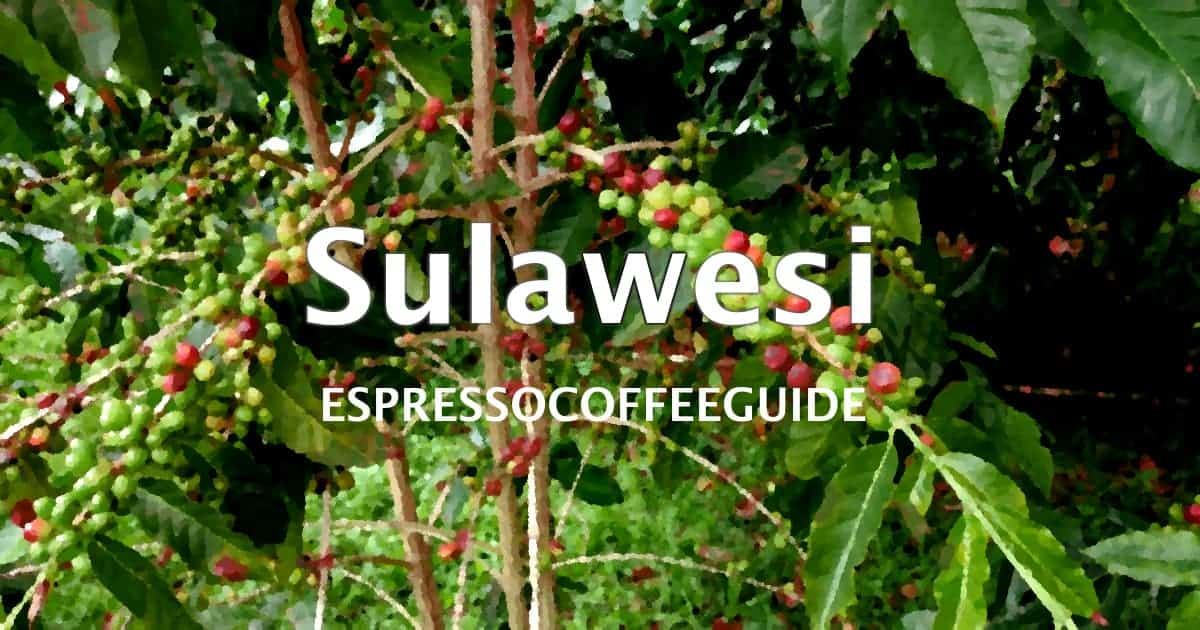 Sulawesi Coffees