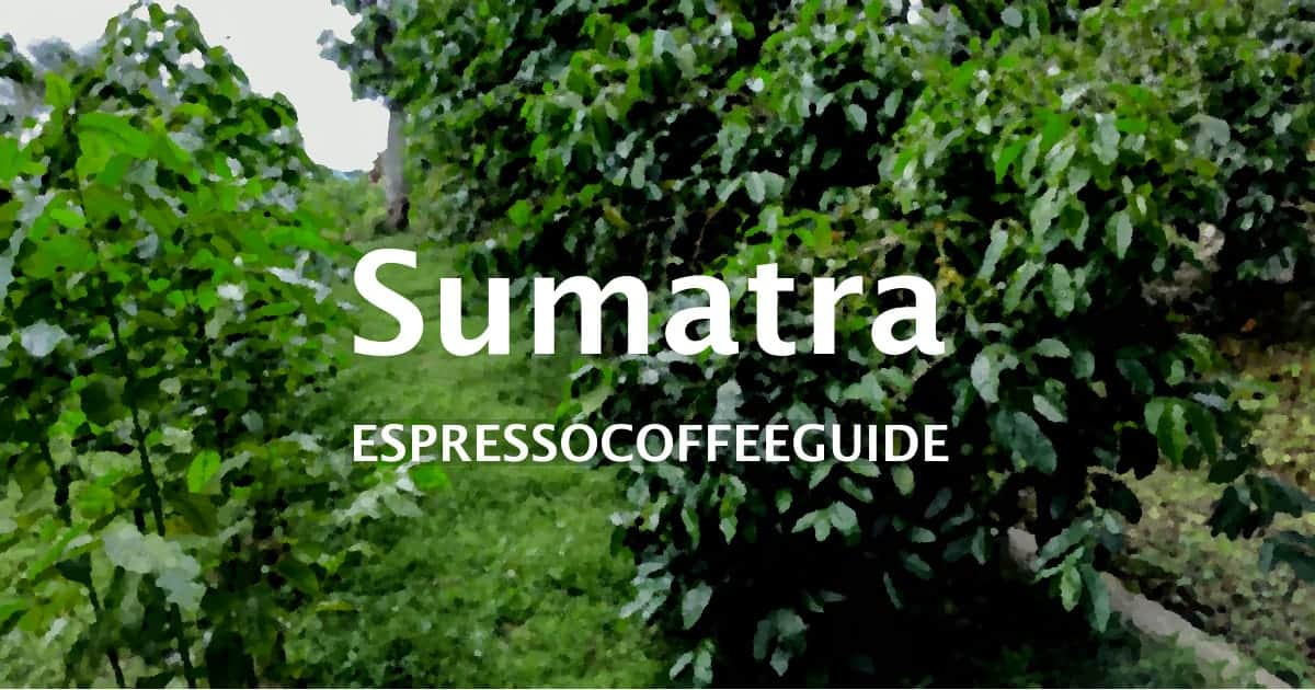 Sumatra Coffees